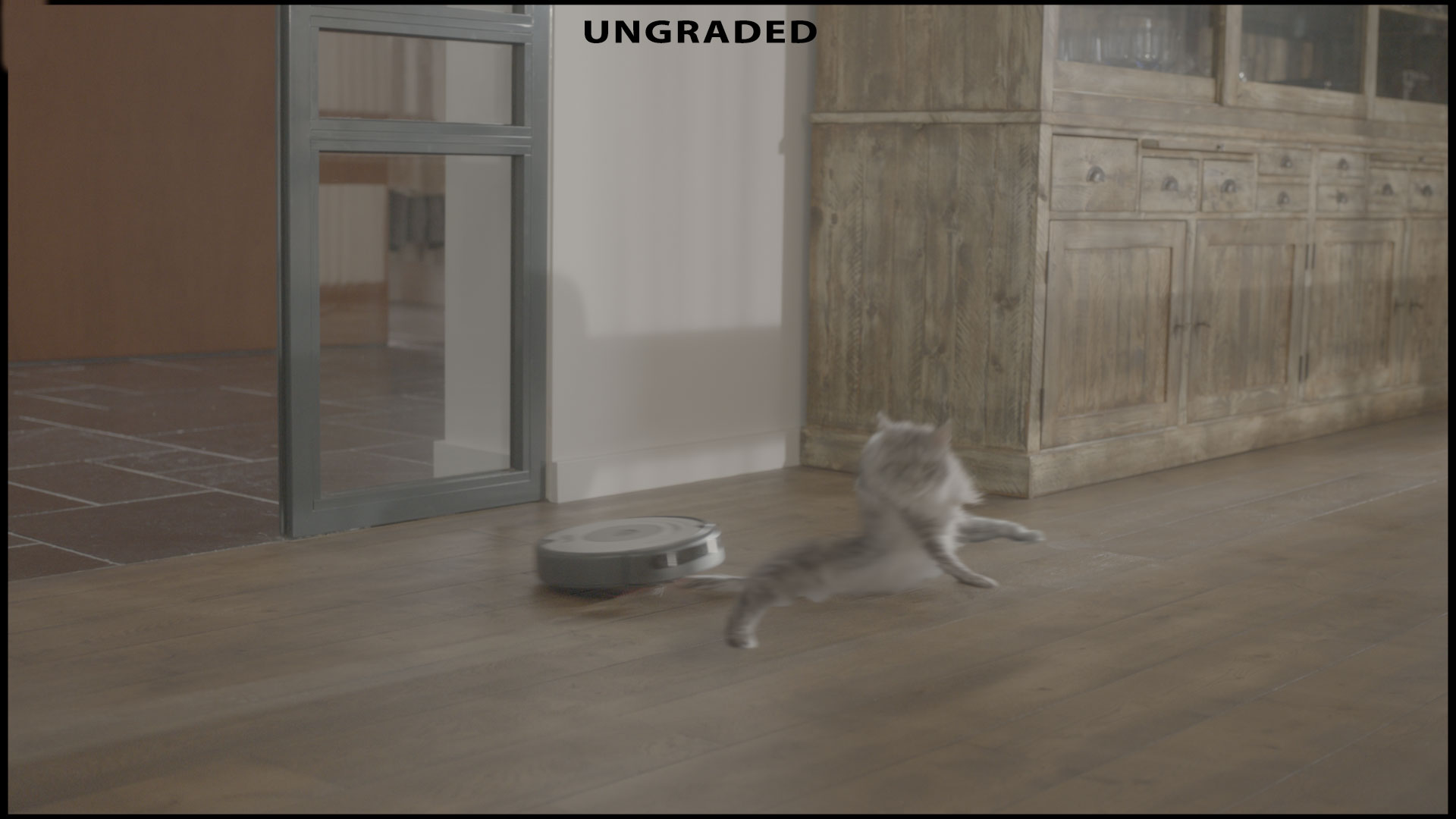 After-Cat animation