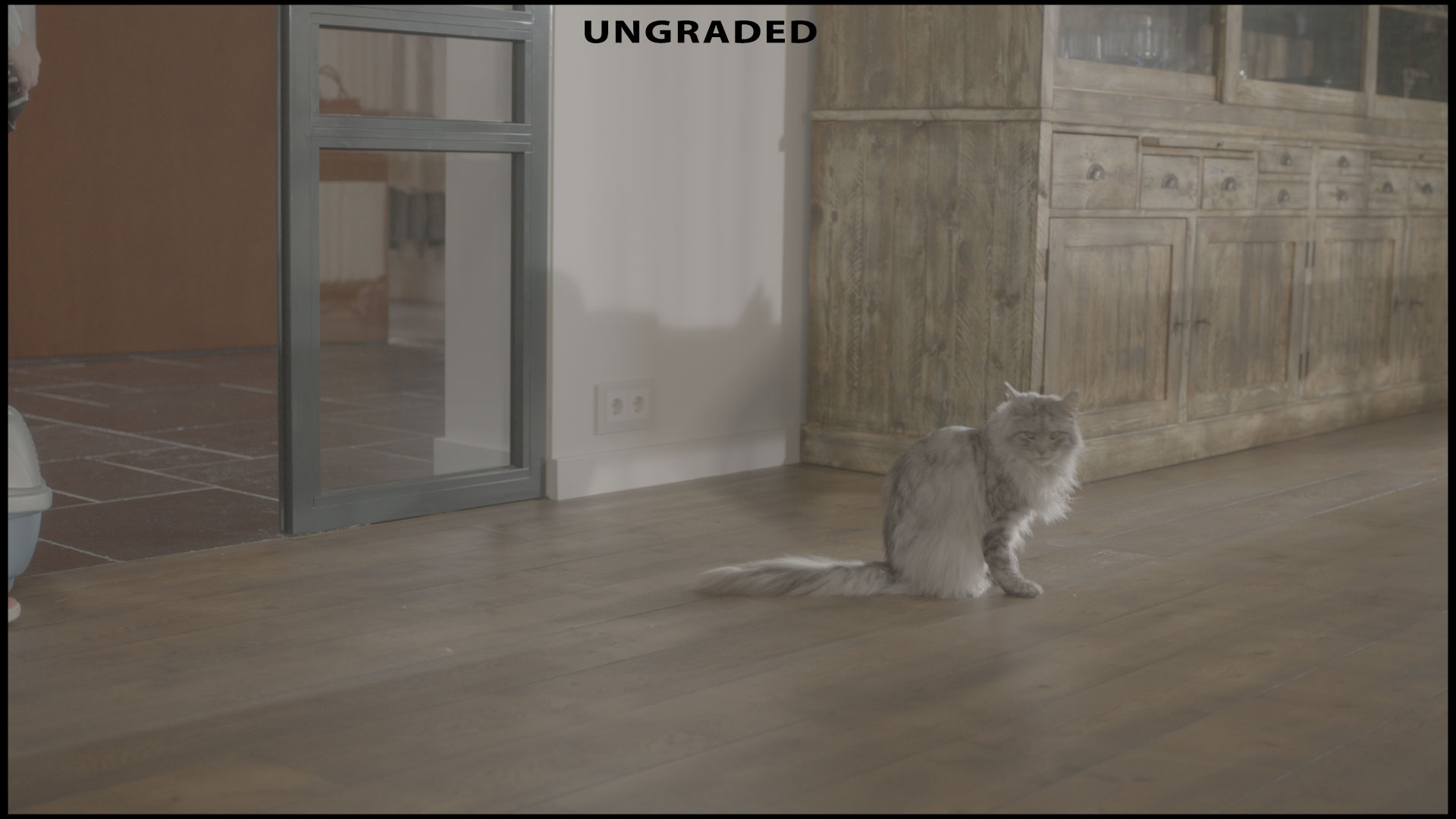 Before-Cat animation